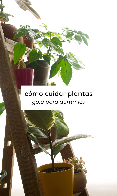 Cómo cuidar plantas: guía para dummies