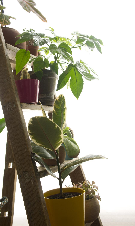 5 cosas que no pueden faltar en mi decoraci n decoraci n for Cosas de casa decoracion online