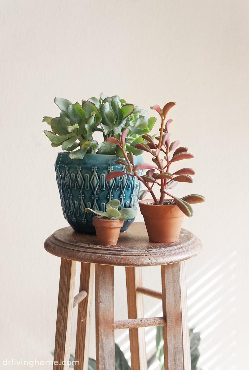 5 plantas f ciles de cuidar ii decoraci n online para tu for Decoracion con plantas en living