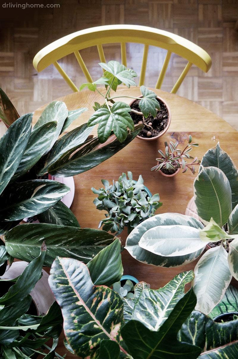 Macetas diy para decorar con plantas decoraci n online for Adornos para plantas con llantas